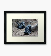 Gorillas In Repose Framed Print