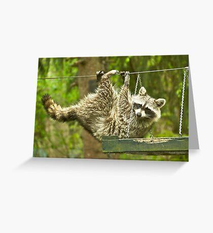 Raccoon Antics Greeting Card