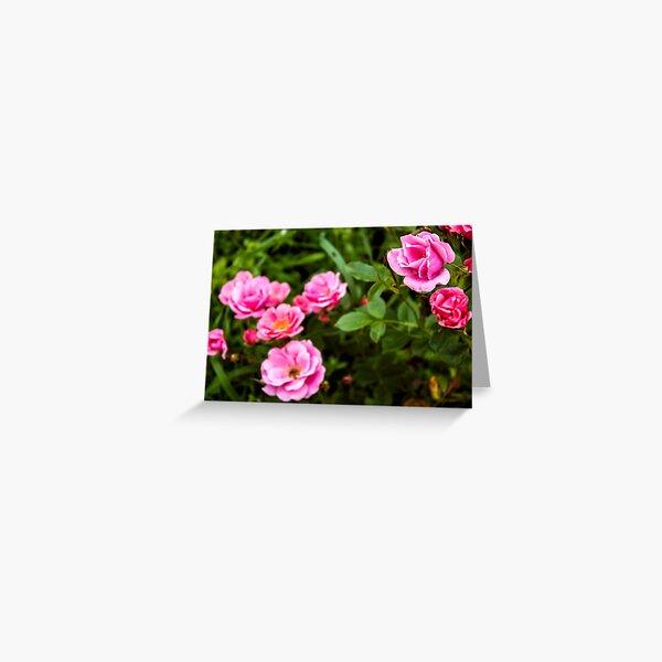New roses Greeting Card
