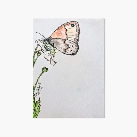 Butterfly on Blackberry Flower Art Board Print
