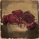 The Veins of the Roses by VictoriaHerrera