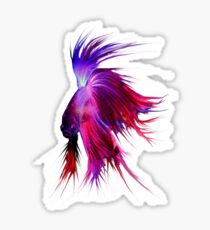Betta Splendens ;Siamese fighting Fish Sticker