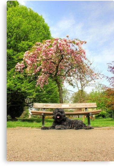 Spring Time Portrait by Vicki Spindler (VHS Photography)
