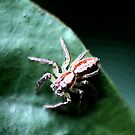 Spider by Jodie Cooper