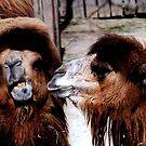 Marital Strife Among Camels by Wayne King
