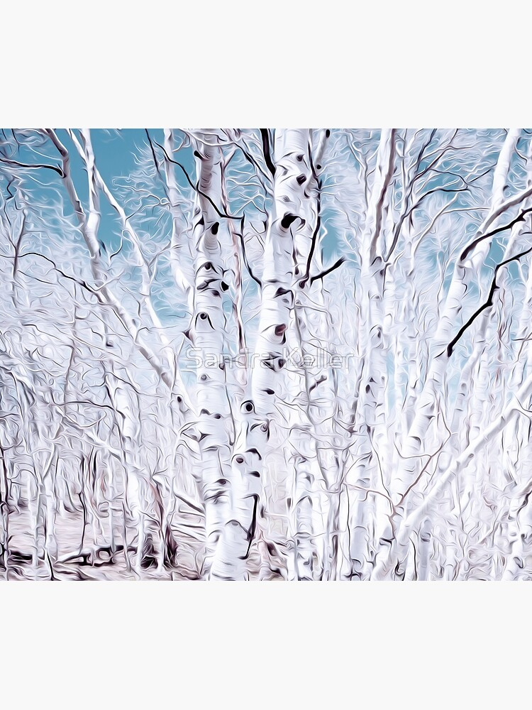 Birch Trees by skc-images