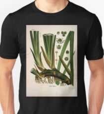 Köhler's Medizinal Pflanzen in naturgetreuen Abbildungen mit kurz erläuterndem Texte  Atlas zur Pharmacopoea 1883 1914 V1 018 Acorus Calamus T-Shirt
