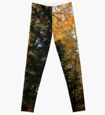 The Lonely Tree in the Forest Leggings