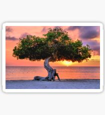Watapana Tree - Aruba Sticker
