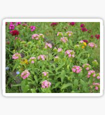 Garden Up North    Pentax Digital Camera 16mp X-5 Series Sticker