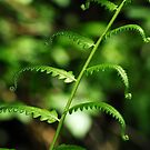 Green Swamp Fern by Jason Pepe