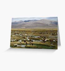Wild Vicuna, Peru Greeting Card