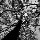 Scary Tree- Giles Ridge Track by Ben Loveday