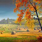 Pasture Meadow by Igor Zenin