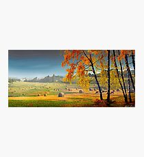 Pasture Meadow Photographic Print