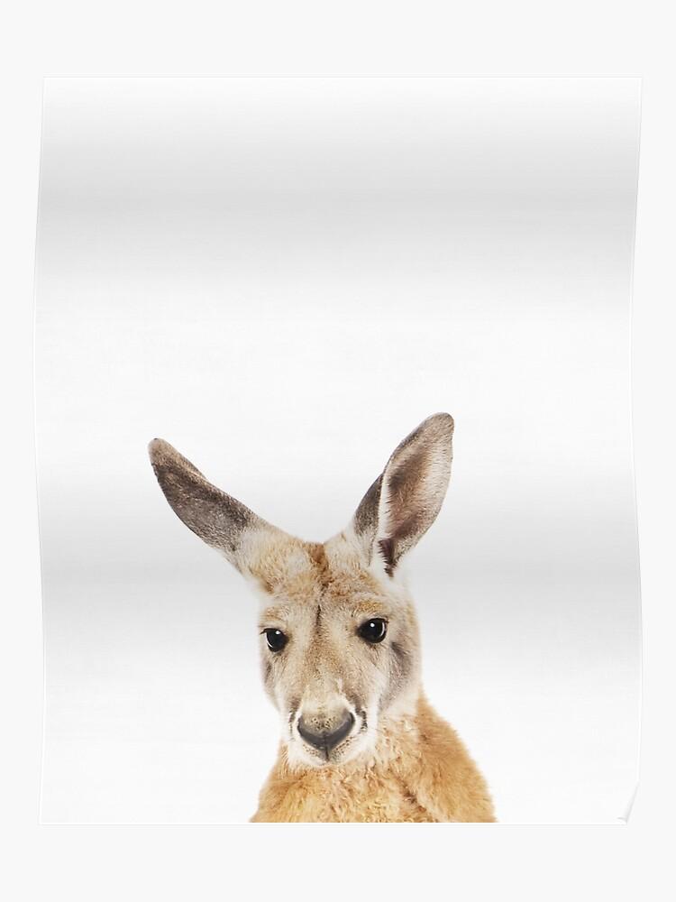 Känguru, Kinderzimmer, Tier, Kinderzimmer, Moderne Kunst, Wanddekoration |  Poster