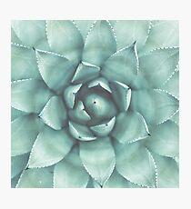 Plants print, Minimalist, Houseleek, Beach art, Nature, Modern art, Wall art Photographic Print