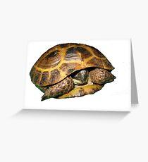 Greek Tortoises in Shell Greeting Card