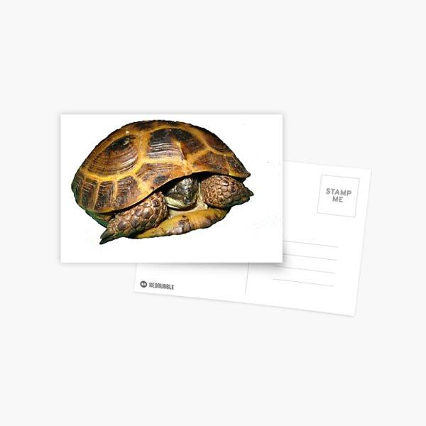 Greek Tortoises in Shell Postcard