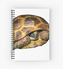 Greek Tortoises in Shell Spiral Notebook