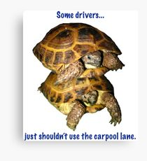 Tortoises - Some people shouldn't use the car pool lane Canvas Print