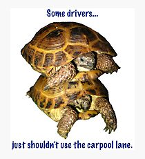 Tortoises - Some people shouldn't use the car pool lane Photographic Print