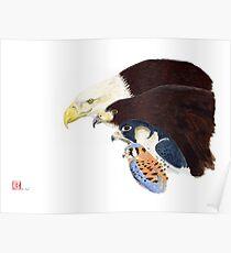 Raptors Poster