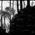 Sun Through Trees by Robert Randle