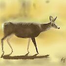 Mule Deer - Sketched on iPad by Ray Cassel