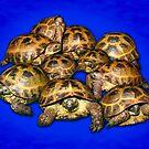 Greek Tortoise Group - Dark Blue by LuckyTortoise