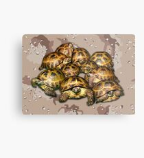 Greek Tortoise Group - Desert Camo Background Metal Print