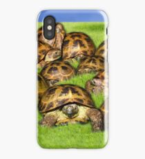 Greek Tortoise Group on Grass Background iPhone Case