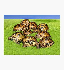 Greek Tortoise Group on Grass Background Photographic Print