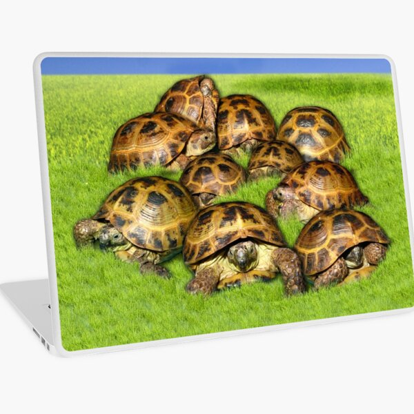 Greek Tortoise Group on Grass Background Laptop Skin