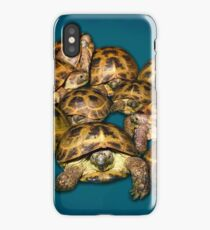 Greek Tortoise Group on Gray-Blue Background iPhone Case