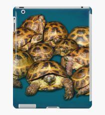 Greek Tortoise Group on Gray-Blue Background iPad Case/Skin