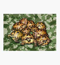 Greek Tortoise Group on Green Camo Photographic Print