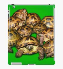 Greek Tortoise Group on Bright Green Background iPad Case/Skin