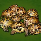 Greek Tortoise Group on Darn Green Background by LuckyTortoise