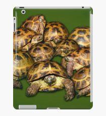 Greek Tortoise Group on Darn Green Background iPad Case/Skin