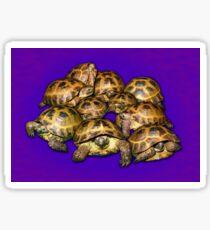 Greek Tortoise Group on Purple Background Sticker