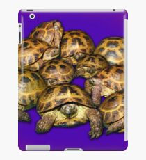 Greek Tortoise Group on Purple Background iPad Case/Skin