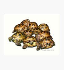 Greek Tortoise Group Art Print