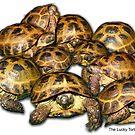 Greek Tortoise Group by LuckyTortoise