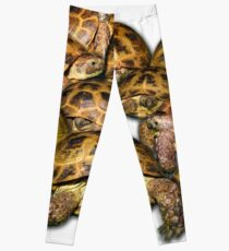Greek Tortoise Group Leggings