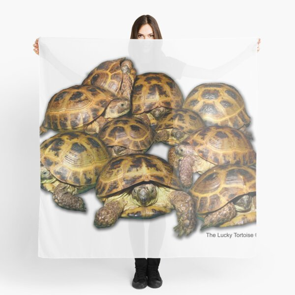 Greek Tortoise Group Scarf
