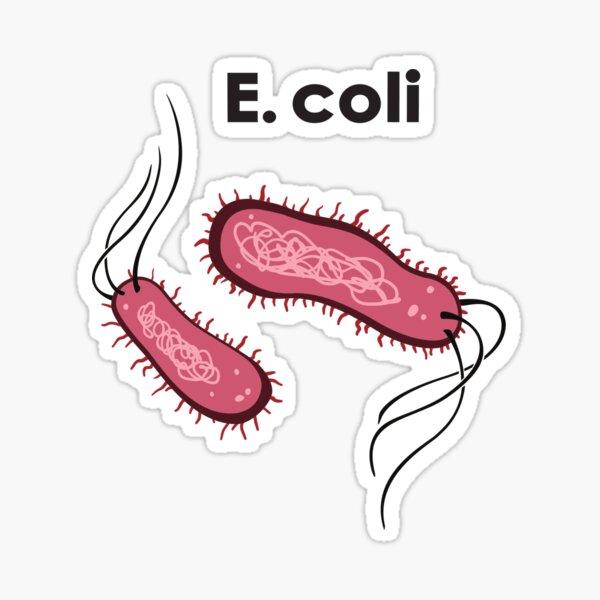 E. coli Pegatina