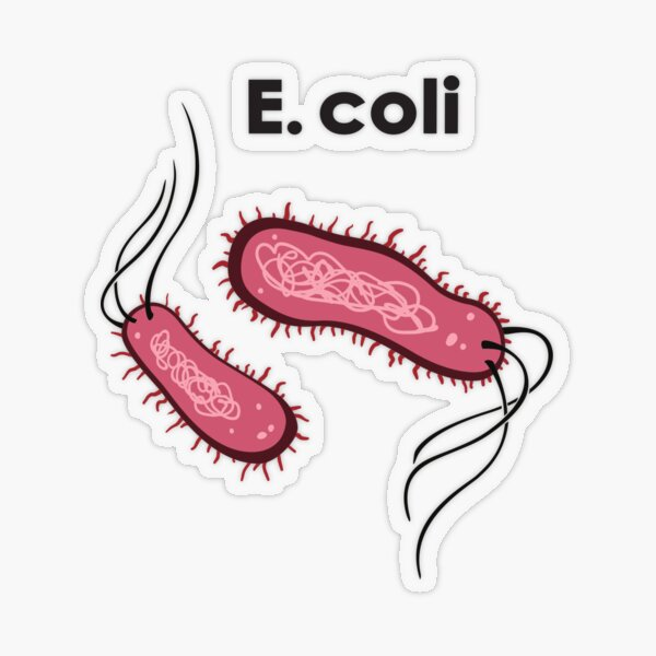 E. coli Transparenter Sticker