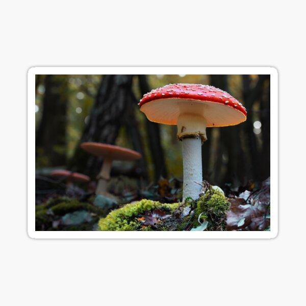 Fly Agaric Fairytale Mushroom Sticker