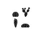 Black Cactus C by George Williams